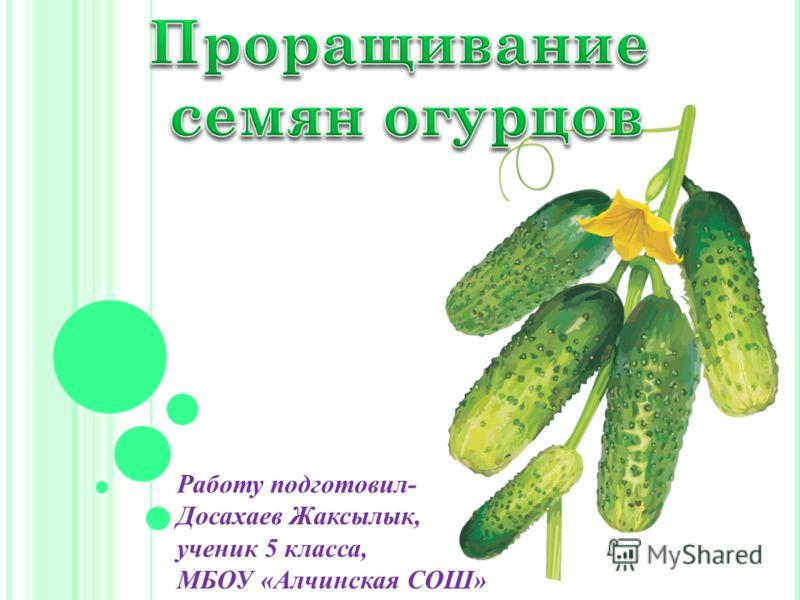 Работу подготовил- Досахаев Жаксылык, ученик 5 класса, МБОУ «Алчинская СОШ»