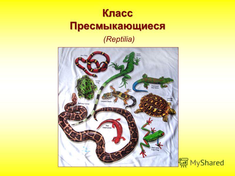 Класс Пресмыкающиеся Класс Пресмыкающиеся (Reptilia)