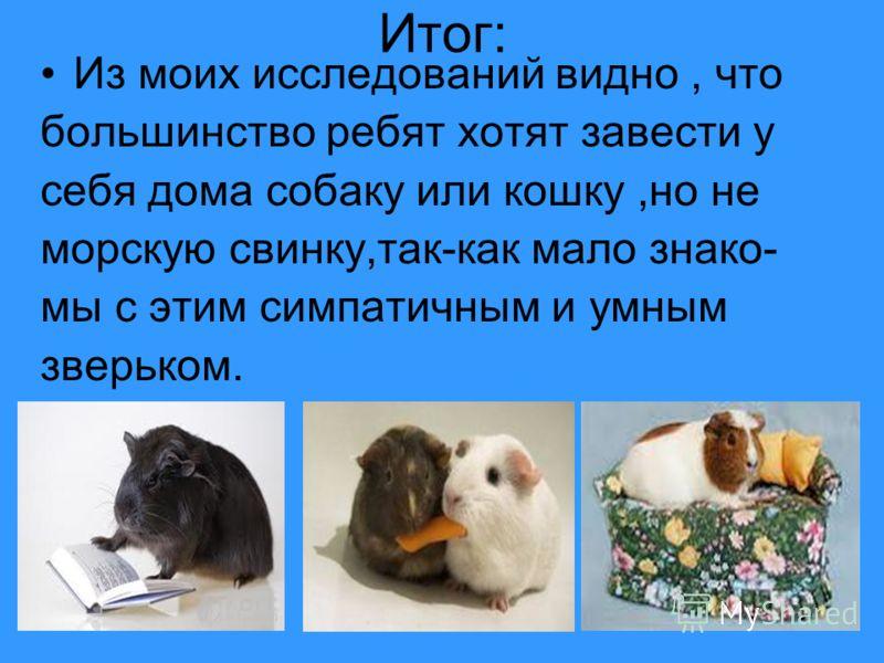 20 Итог: Из моих исследований видно, что большинство ребят хотят завести у себя дома собаку или кошку,но не морскую свинку,так-как мало знако- мы с этим симпатичным и умным зверьком.