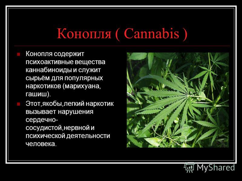 marijuana addiction Is marijuana addictive can recreational pot smokers become addicted posted dec 05, 2010.