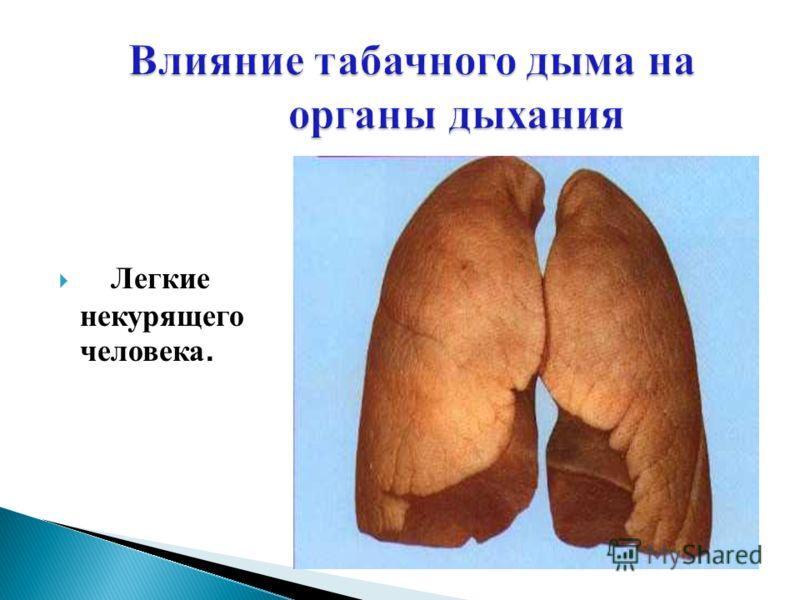 Легкие некурящего человека.