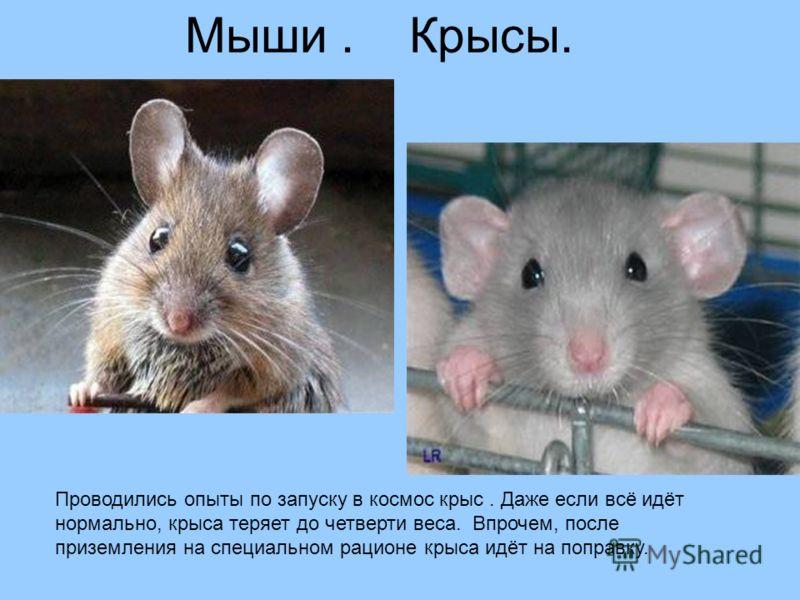 Мыши. Крысы. Проводились опыты по запуску в космос крыс. Даже если всё идёт нормально, крыса теряет до четверти веса. Впрочем, после приземления на специальном рационе крыса идёт на поправку.
