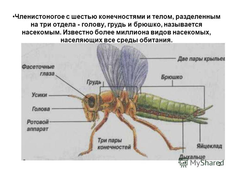2 Членистоногое с шестью конечностями и телом, разделенным на три отдела - голову, грудь и брюшко, называется насекомым. Известно более миллиона видов насекомых, населяющих все среды обитания.