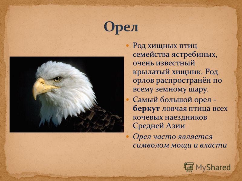 Род хищных птиц семейства ястребиных, очень известный крылатый хищник. Род орлов распространён по всему земному шару. Самый большой орел - беркут ловчая птица всех кочевых наездников Средней Азии Орел часто является символом мощи и власти