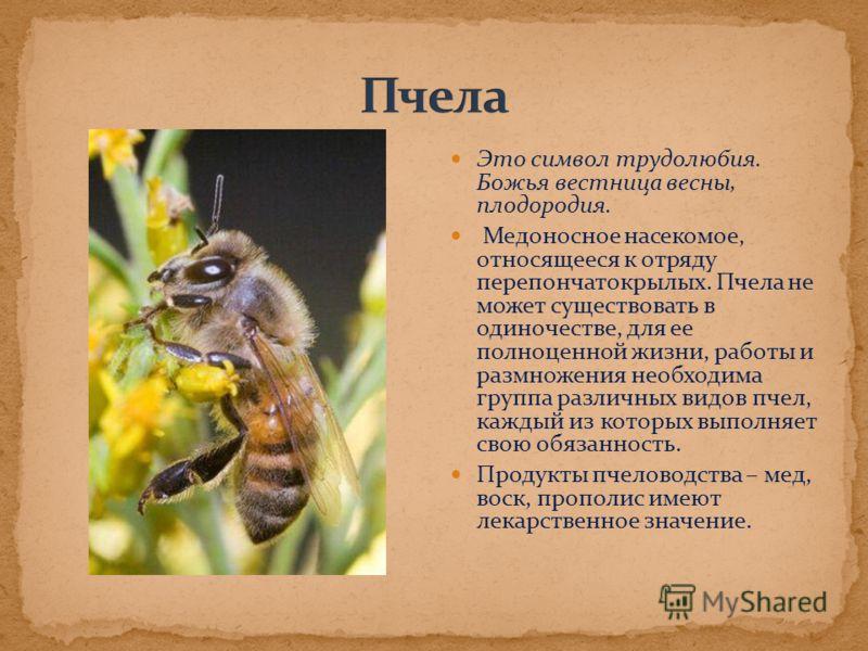 Это символ трудолюбия. Божья вестница весны, плодородия. Медоносное насекомое, относящееся к отряду перепончатокрылых. Пчела не может существовать в одиночестве, для ее полноценной жизни, работы и размножения необходима группа различных видов пчел, к