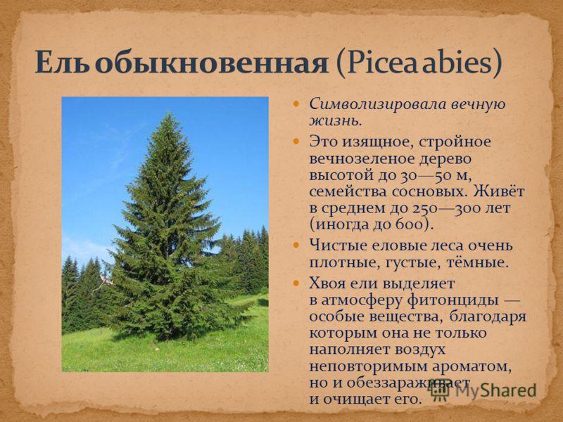 Символизировала вечную жизнь. Это изящное, стройное вечнозеленое дерево высотой до 3050 м, семейства сосновых. Живёт в среднем до 250300 лет (иногда до 600). Чистые еловые леса очень плотные, густые, тёмные. Хвоя ели выделяет в атмосферу фитонциды ос