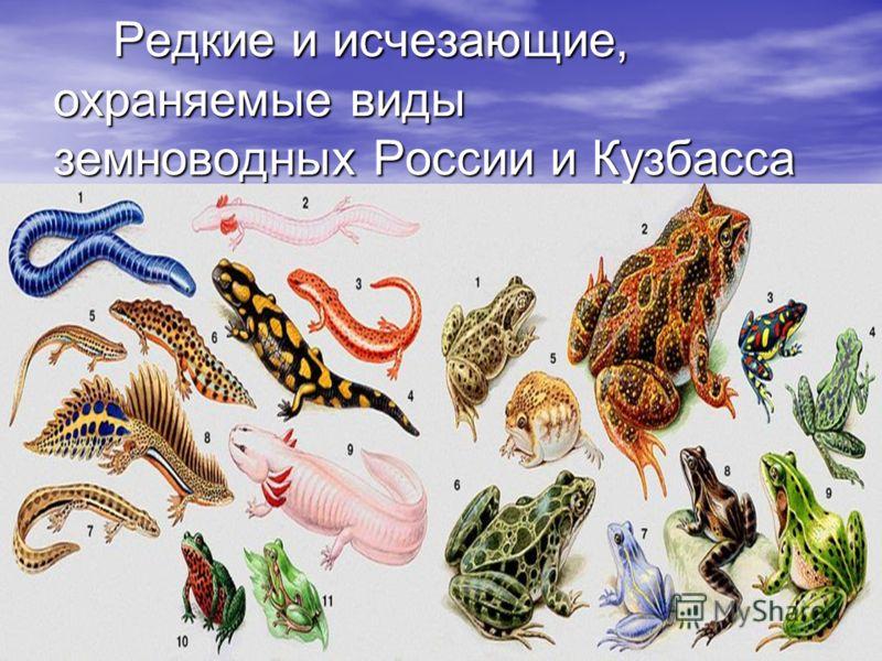 Редкие и исчезающие, охраняемые виды земноводных России и Кузбасса Редкие и исчезающие, охраняемые виды земноводных России и Кузбасса