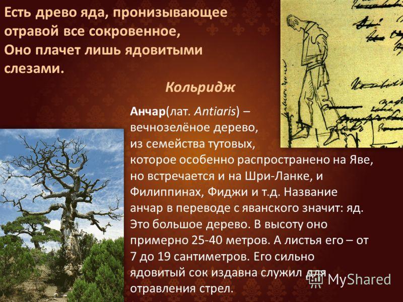 Отравленное дерево стих