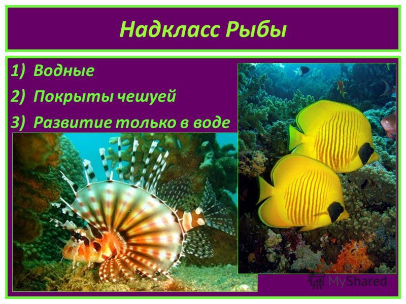 Надкласс Рыбы 1)Водные 2)Покрыты чешуей 3)Развитие только в воде