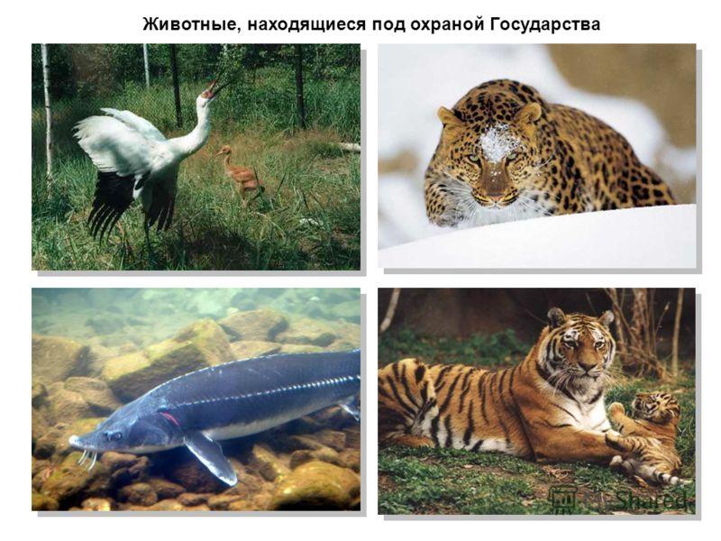 Животные, находящиеся под охраной Государства