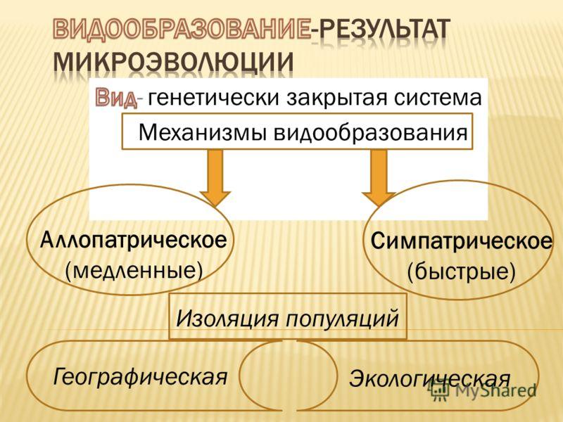 Аллопатрическое (медленные) Симпатрическое (быстрые) Механизмы видообразования Изоляция популяций Географическая Экологическая