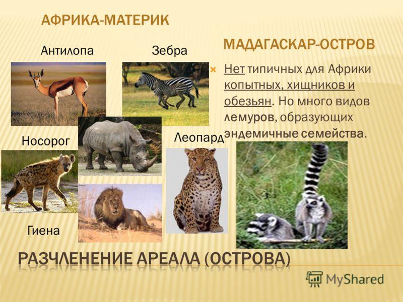 АФРИКА-МАТЕРИК МАДАГАСКАР-ОСТРОВ Нет типичных для Африки копытных, хищников и обезьян. Но много видов лемуров, образующих эндемичные семейства. АнтилопаЗебра Носорог Гиена Леопард