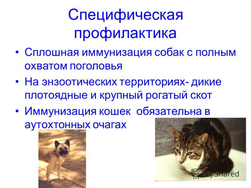 Специфическая профилактика Сплошная иммунизация собак с полным охватом поголовья На энзоотических территориях- дикие плотоядные и крупный рогатый скот Иммунизация кошек обязательна в аутохтонных очагах