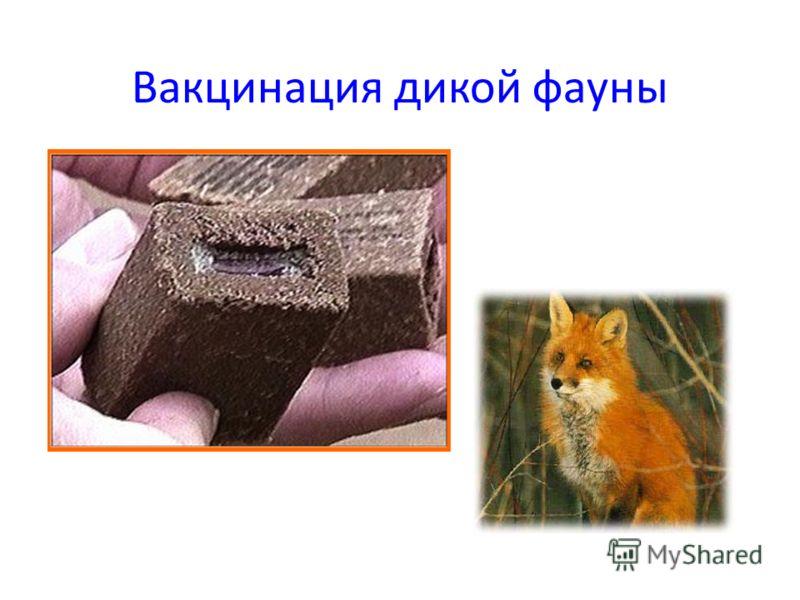 Вакцинация дикой фауны