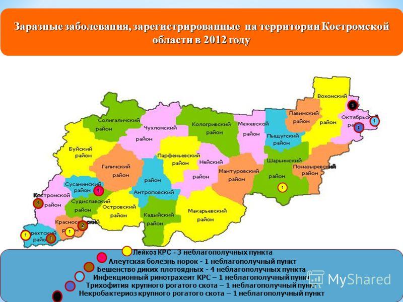 Заразные заболевания, зарегистрированные на территории Костромской области в 2012 году Лейкоз КРС - 3 неблагополучных пункта Алеутская болезнь норок - 1 неблагополучный пункт Бешенство диких плотоядных - 4 неблагополучных пункта Инфекционный ринотрах
