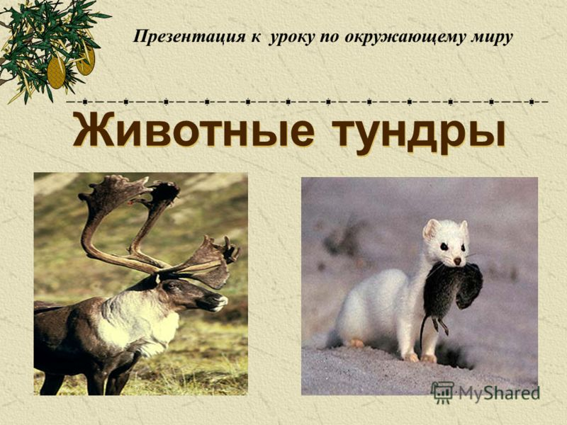Презентация на тему Животные тундры Презентация к уроку по  2 Животные