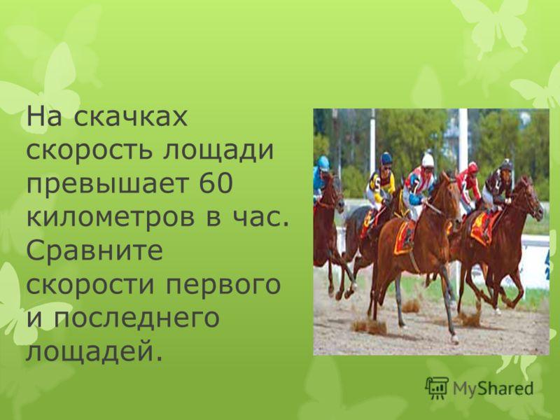 На скачках скорость лощади превышает 60 километров в час. Сравните скорости первого и последнего лощадей.