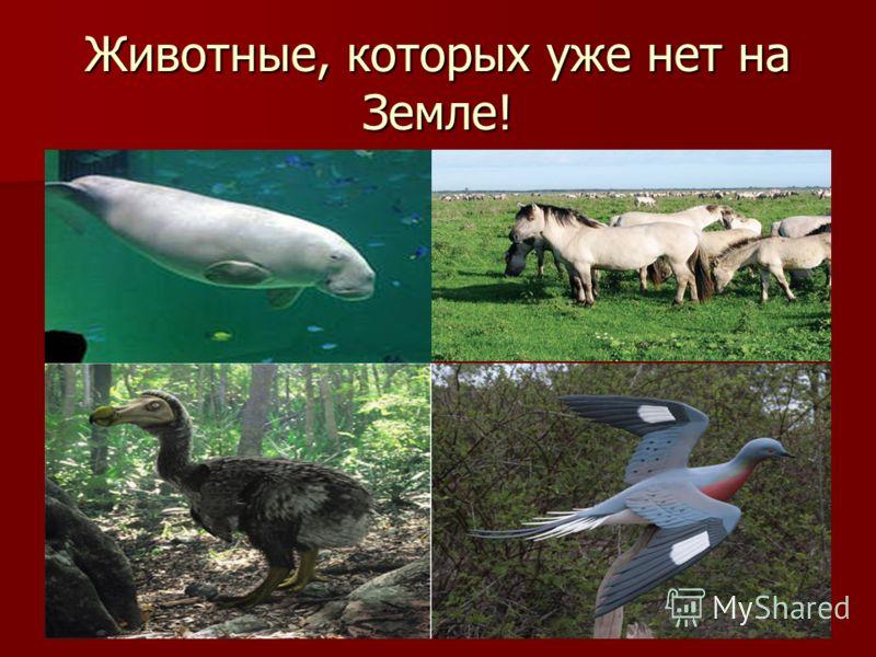 Животные, которых уже нет на Земле!