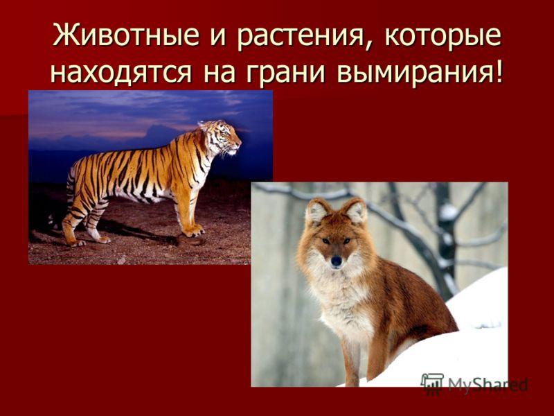 Животные и растения, которые находятся на грани вымирания!