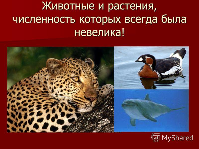 Животные и растения, численность которых всегда была невелика!