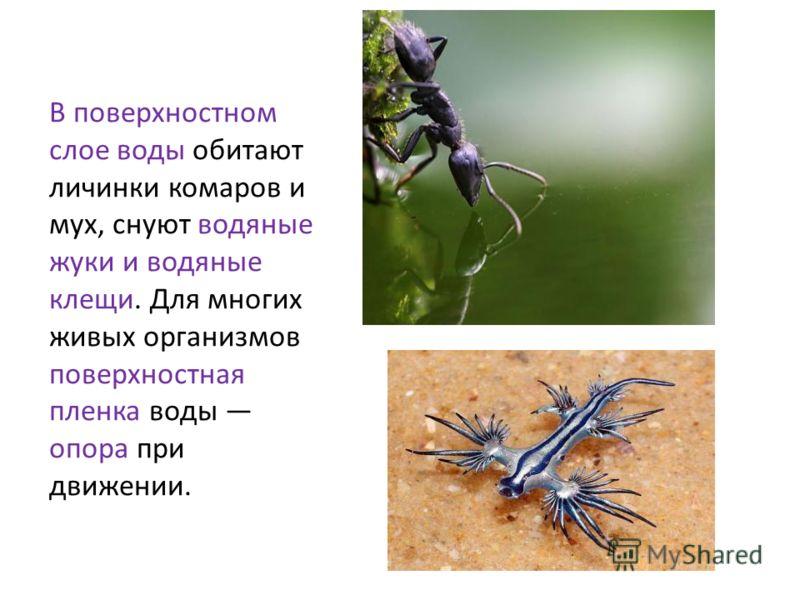 В поверхностном слое воды обитают личинки комаров и мух, снуют водяные жуки и водяные клещи. Для многих живых организмов поверхностная пленка воды опора при движении.