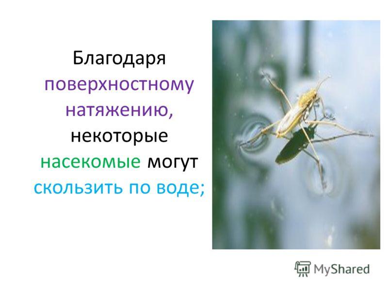 Благодаря поверхностному натяжению, некоторые насекомые могут скользить по воде;
