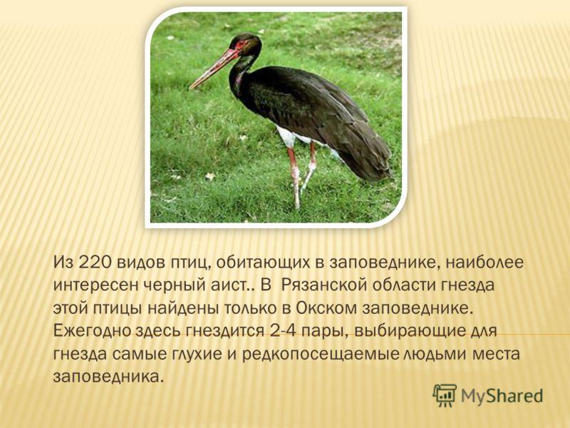 Из 220 видов птиц, обитающих в заповеднике, наиболее интересен черный аист.. В Рязанской области гнезда этой птицы найдены только в Окском заповеднике. Ежегодно здесь гнездится 2-4 пары, выбирающие для гнезда самые глухие и редкопосещаемые людьми мес