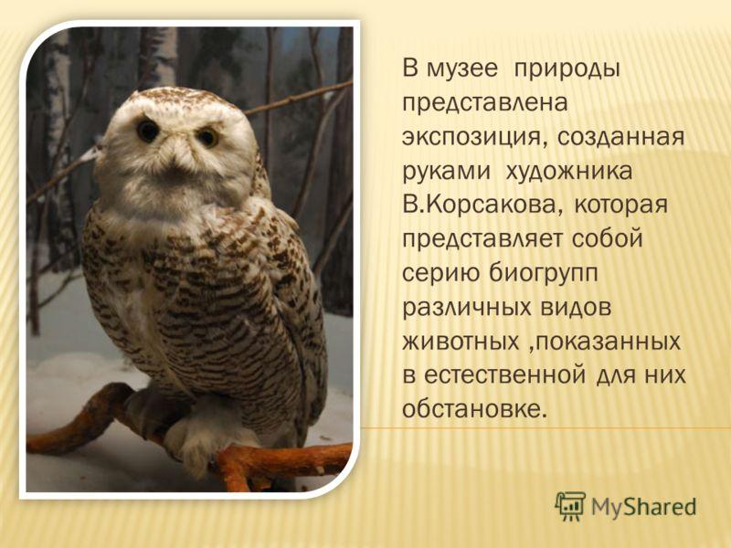 В музее природы представлена экспозиция, созданная руками художника В.Корсакова, которая представляет собой серию биогрупп различных видов животных,показанных в естественной для них обстановке.