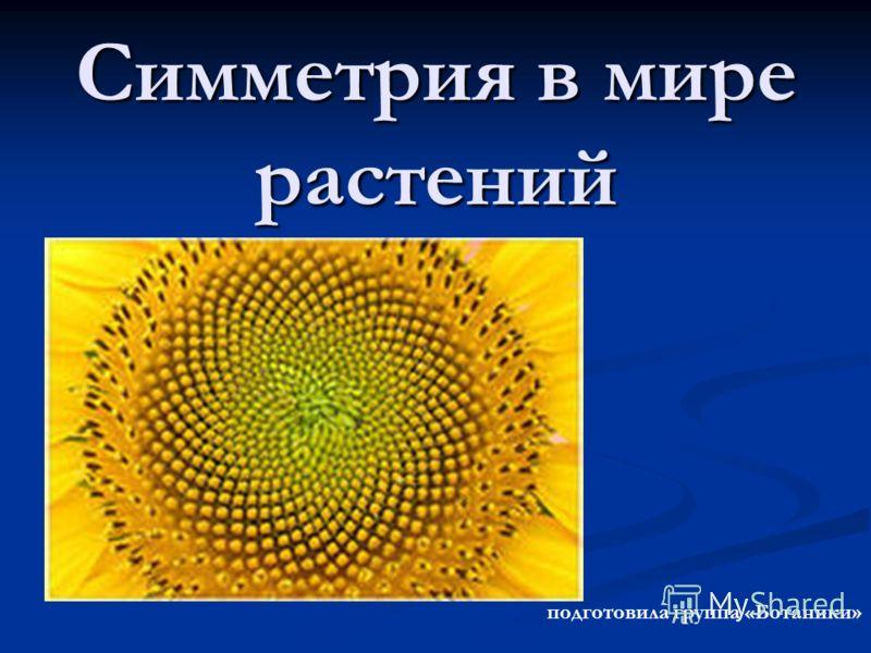 Симметрия в мире растений подготовила группа «Ботаники»