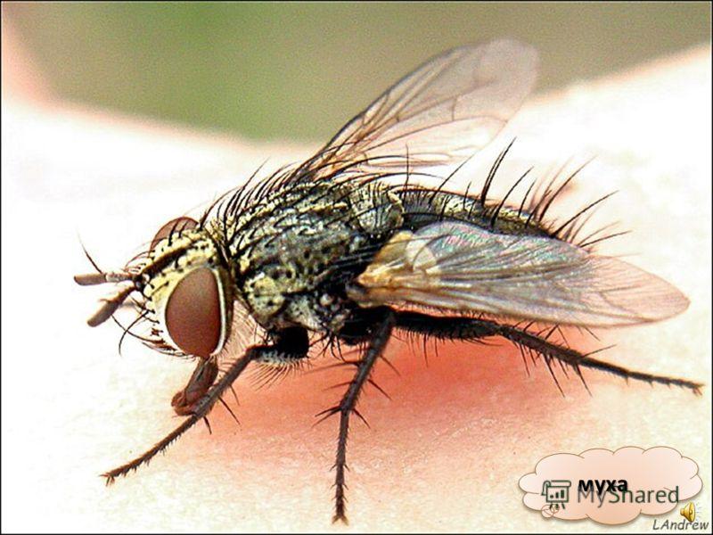 комаркомар