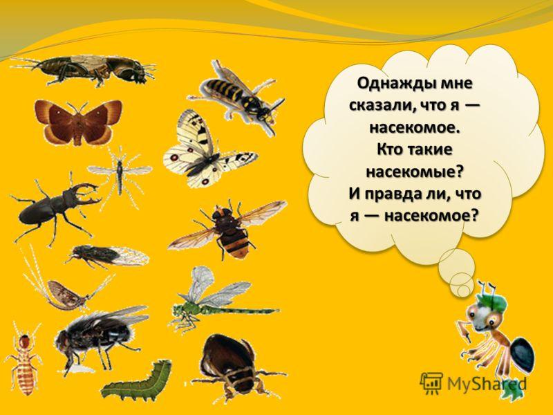 Насекомые и правда ли что я насекомое