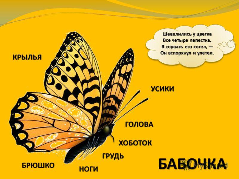 Как же узнать, какое из этих животных насекомое? Посмотри на меня. Я – насекомое.