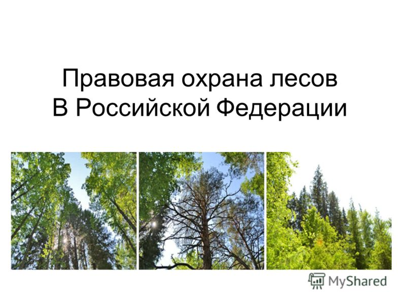 Правовая охрана лесов В Российской Федерации