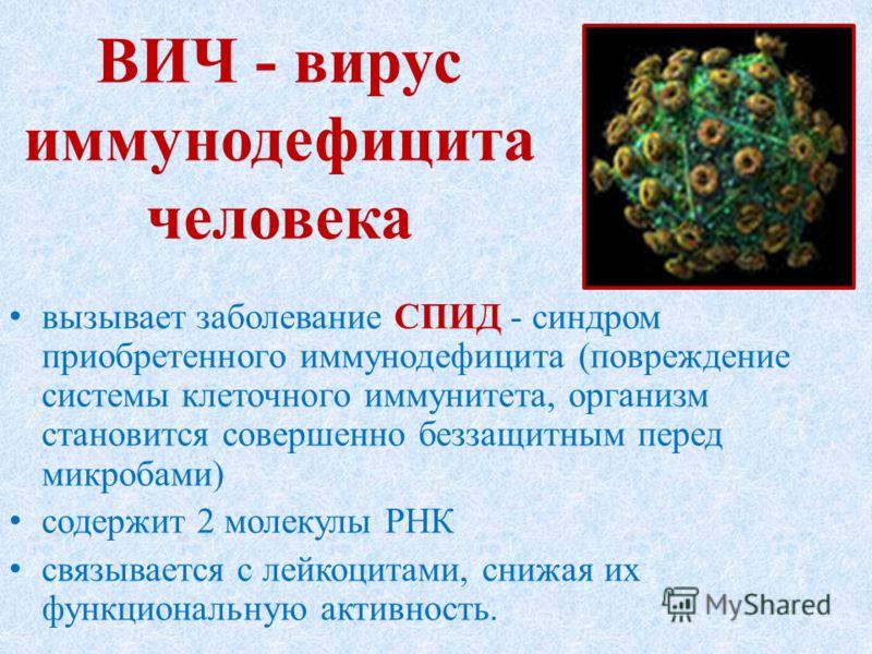 ВИЧ - вирус иммунодефицита человека вызывает заболевание СПИД - синдром приобретенного иммунодефицита (повреждение системы клеточного иммунитета, организм становится совершенно беззащитным перед микробами) содержит 2 молекулы РНК связывается с лейкоц