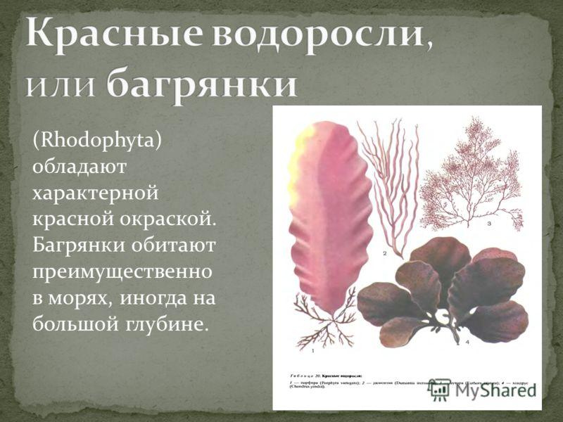 (Rhodophyta) обладают характерной красной окраской. Багрянки обитают преимущественно в морях, иногда на большой глубине.