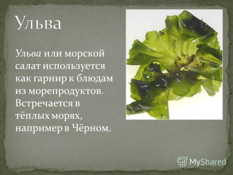 Ульва или морской салат используется как гарнир к блюдам из морепродуктов. Встречается в тёплых морях, например в Чёрном.