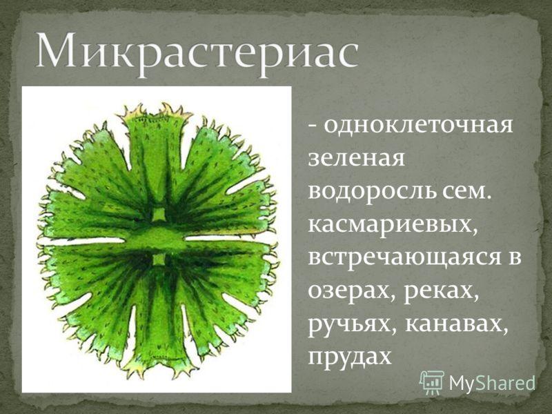 - одноклеточная зеленая водоросль сем. касмариевых, встречающаяся в озерах, реках, ручьях, канавах, прудах