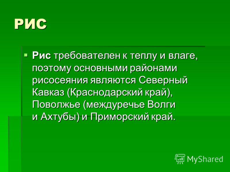 РИС Рис требователен к теплу и влаге, поэтому основными районами рисосеяния являются Северный Кавказ (Краснодарский край), Поволжье (междуречье Волги и Ахтубы) и Приморский край. Рис требователен к теплу и влаге, поэтому основными районами рисосеяния