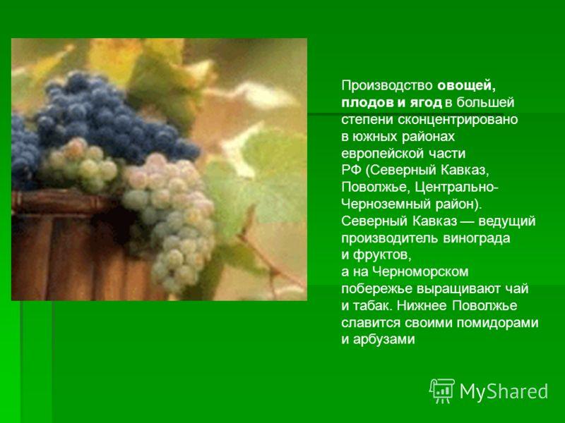 Производство овощей, плодов и ягод в большей степени сконцентрировано в южных районах европейской части РФ (Северный Кавказ, Поволжье, Центрально- Черноземный район). Северный Кавказ ведущий производитель винограда и фруктов, а на Черноморском побере