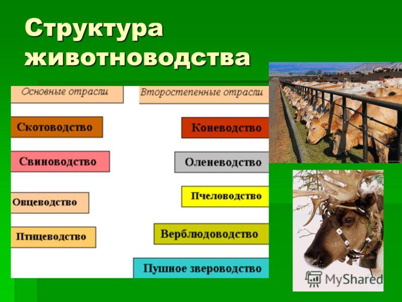 животноводство знасение отрасли в народном хозяйстве поделка