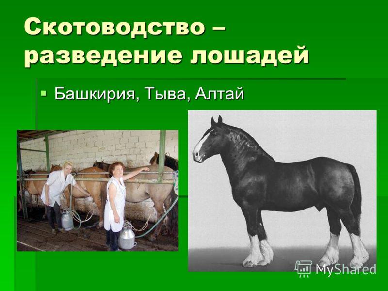 Скотоводство – разведение лошадей Башкирия, Тыва, Алтай Башкирия, Тыва, Алтай