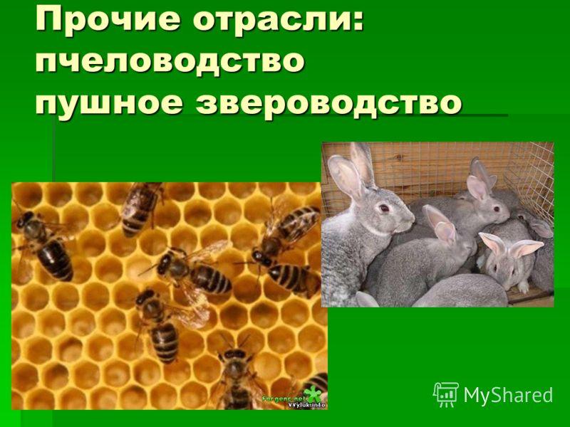 Прочие отрасли: пчеловодство пушное звероводство