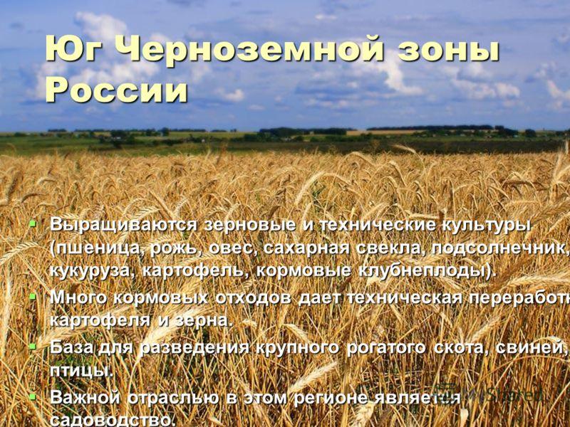 Юг Черноземной зоны России Выращиваются зерновые и технические культуры (пшеница, рожь, овес, сахарная свекла, подсолнечник, кукуруза, картофель, кормовые клубнеплоды). Выращиваются зерновые и технические культуры (пшеница, рожь, овес, сахарная свекл