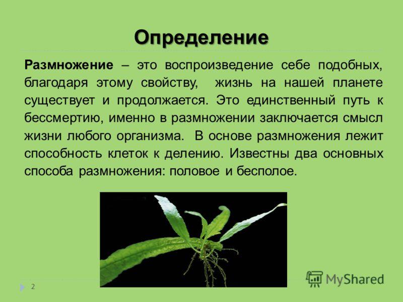 Определение Размножение – это воспроизведение себе подобных, благодаря этому свойству, жизнь на нашей планете существует и продолжается. Это единственный путь к бессмертию, именно в размножении заключается смысл жизни любого организма. В основе размн