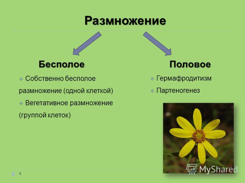 Размножение Бесполое Собственно бесполое размножение (одной клеткой) Вегетативное размножение (группой клеток) Половое Гермафродитизм Партеногенез 4