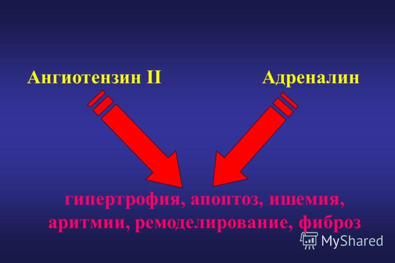 Ангиотензин IIАдреналин гипертрофия, апоптоз, ишемия, аритмии, ремоделирование, фиброз