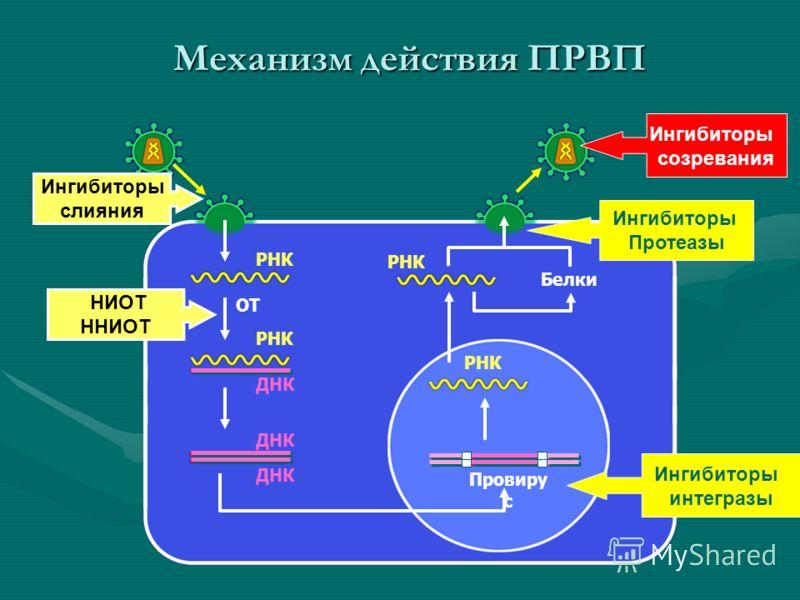 ОТ Провиру с Белки РНК НИОТ ННИОТ РНК ДНК Механизм действия ПРВП Ингибиторы Протеазы Ингибиторы слияния Ингибиторы интегразы Ингибиторы созревания