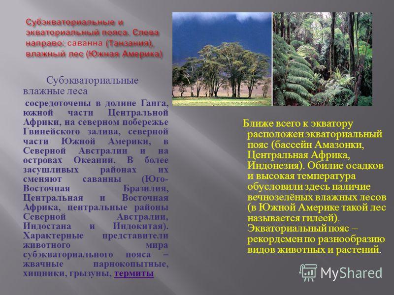 Субэкваториальные влажные леса сосредоточены в долине Ганга, южной части Центральной Африки, на северном побережье Гвинейского залива, северной части Южной Америки, в Северной Австралии и на островах Океании. В более засушливых районах их сменяют сав