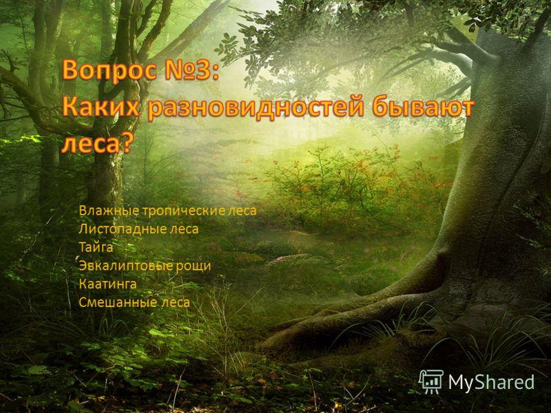 Влажные тропические леса Листопадные леса Тайга Эвкалиптовые рощи Каатинга Смешанные леса