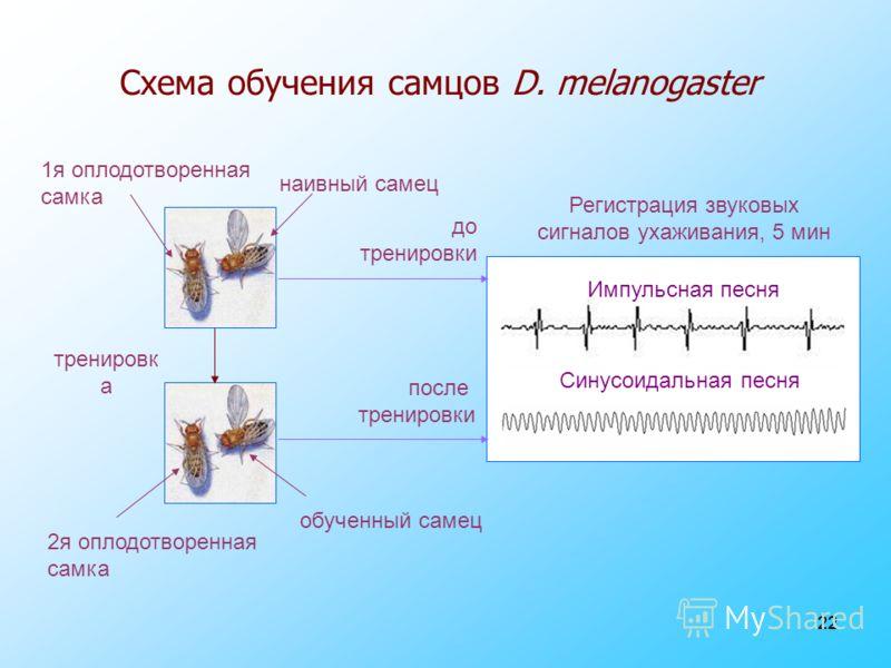 22 Схема обучения самцов D. melanogaster 1я оплодотворенная самка 2я оплодотворенная самка наивный самец обученный самец тренировк а Импульсная песня Синусоидальная песня Регистрация звуковых сигналов ухаживания, 5 мин до тренировки после тренировки